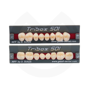 Product - DIENTES TRIBOS 501 POSTERIOR