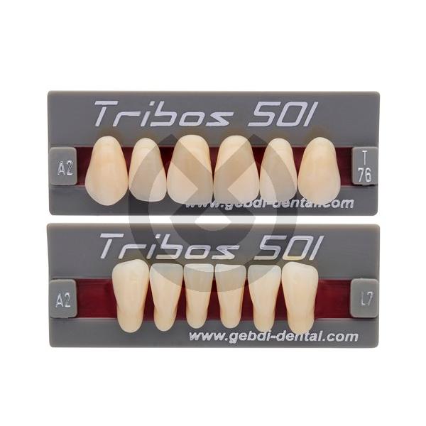 DIENTES TRIBOS 501 ANTERIOR